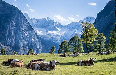 Austria - oferty promowe